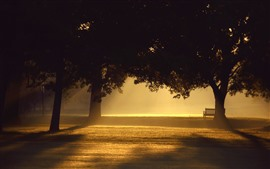 Trees, fog, bench, sunshine, morning, park