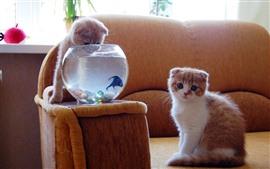 Dois gatinhos, peixe