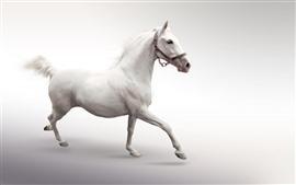 Белая лошадь бежит, белый фон