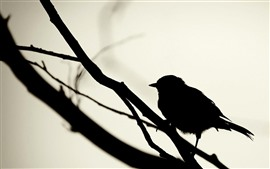Preview wallpaper Bird, silhouette, sparrow