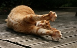 Preview wallpaper Cute orange cat sleep, paws