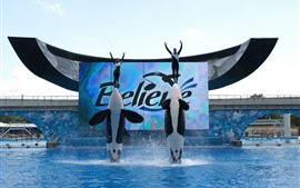 Dolphin, show, pool