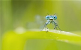 Preview wallpaper Dragonfly, blue eyes, green leaf, hazy