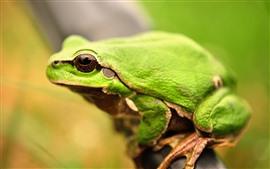 Green frog, eye, hazy