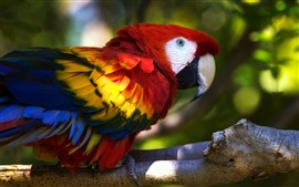 Preview wallpaper Macaw, parrot, beautiful feathers