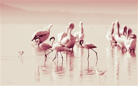 Some flamingo, pink feather birds