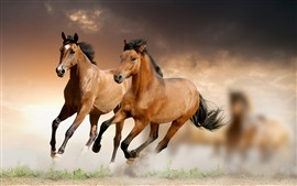 Preview wallpaper Two brown horses running, speed