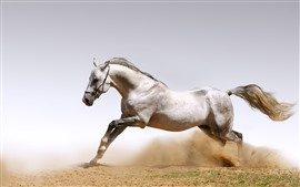 Preview wallpaper White horse, freedom, running
