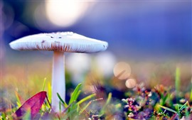 Cogumelo branco, fundo nebuloso