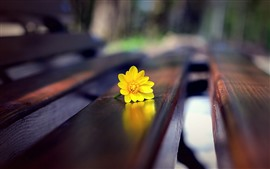 Flor amarilla, banco, nebuloso