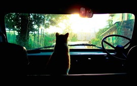 Preview wallpaper Cat in car, look out window, sunlight
