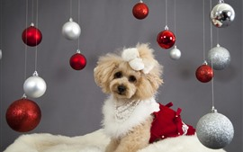 Preview wallpaper Cute dog and Christmas balls