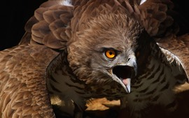 Preview wallpaper Eagle, beak, angry