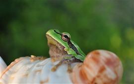 預覽桌布 青蛙,眼睛,貝殼