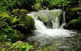 Georgia Park, cachoeiras, pedras, musgo