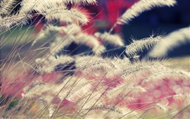 Grass, hazy background