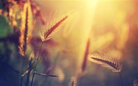 Трава, теплый свет, утро