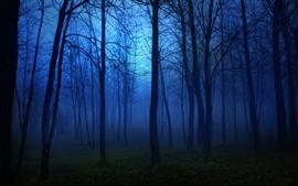 Night, forest, trees, fog