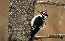 Preview wallpaper One bird, woodpecker