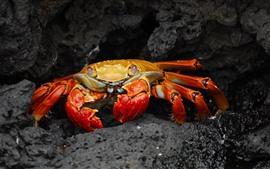 One crab