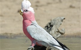 Pink feather parrot