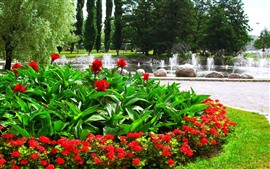 Preview wallpaper Red flowers, green leaves, fountain, park