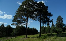 Preview wallpaper Some trees, blue sky, summer