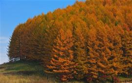 Trees, fence, autumn, gold