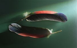 Preview wallpaper Two colorful feathers, green background