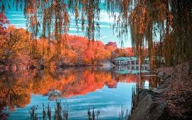 壁紙のプレビュー 美しい秋、公園、池、柳、木々