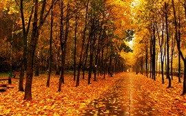 Beautiful park in autumn, yellow maple leaves, trees, wet road