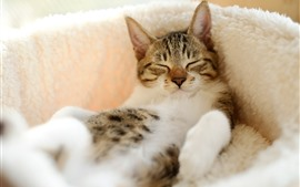 Preview wallpaper Cat in sleeping, pet
