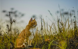 Preview wallpaper Cat sit on ground, grass, nature