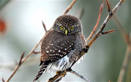 Preview wallpaper Cute owl, twigs, tree, look