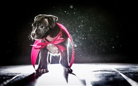Preview wallpaper Cute puppy, backlight, glare, shadow