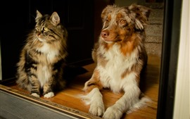 Dog and cat, sit, look