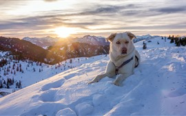 Preview wallpaper Dog in winter, snow, mountains, sunset