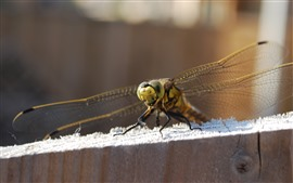 Preview wallpaper Dragonfly, wings, wood