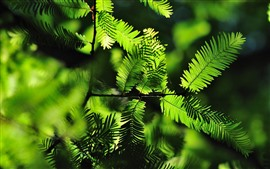 Green fern leaves, backlight