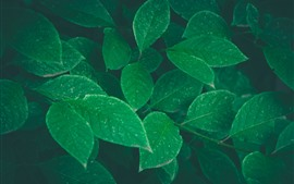 Preview wallpaper Green leaves, plants, hazy