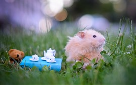 Preview wallpaper Hamster, tea, grass, funny animals