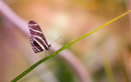 One butterfly, green grass leaf, insect