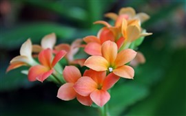 Orange little flowers, petals