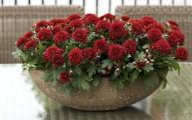 Красные хризантемы, чаша