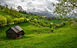 Romania, green, trees, clouds, beautiful village