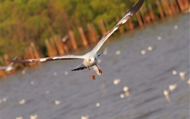 Preview wallpaper Seagull, flight, wings, sea, hazy