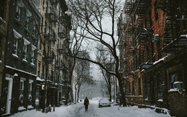 Snow, street, city, trees, winter