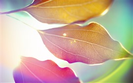 Preview wallpaper Some leaves, glare