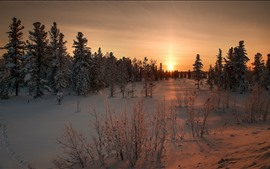 Sunset, snow, trees, winter, dusk