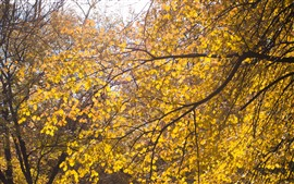 Tree, yellow leaves, twigs, autumn